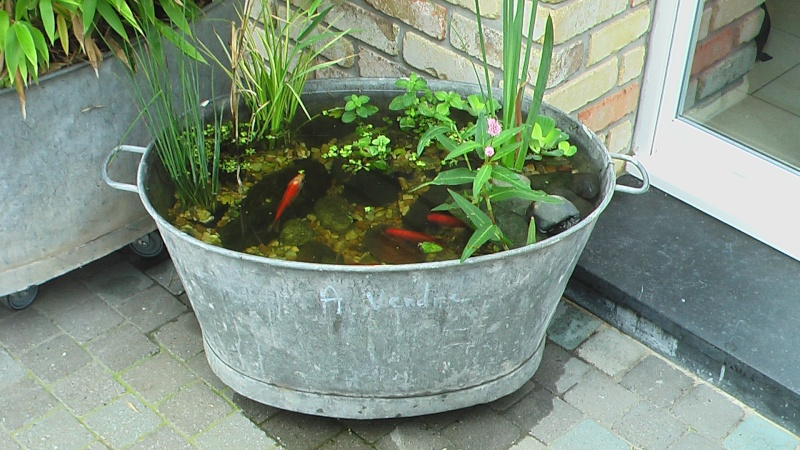 D co jardin avec bassine zinc for Fontaine de jardin zinc