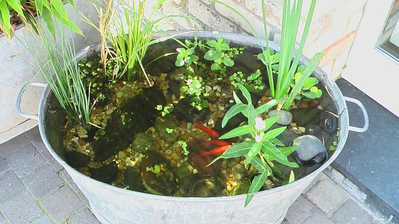 Deco jardin en zinc decorating ideas - Leroy merlin jardiniere ...